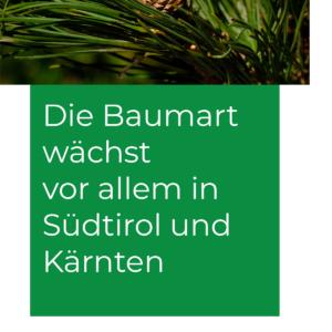 Zirbe_waechst_in_SuedtirolKaernten-1
